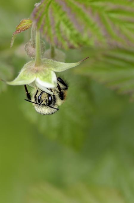 Bee collecting food