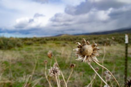 Beige field plants with a landscape backgrounf