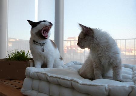 Big morning yawns