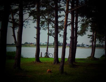 Bike on the summer beach