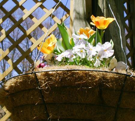 Biltmore estate flower garden