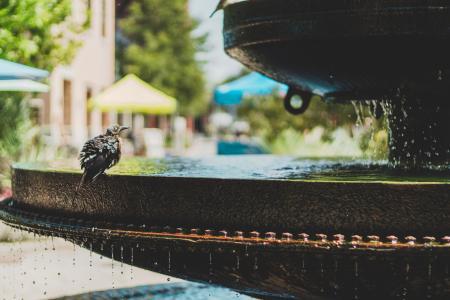 Bird on Birdbath