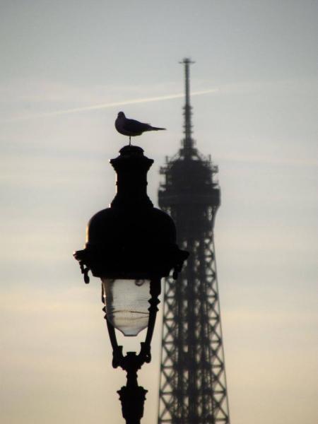 Bird on the Lantern