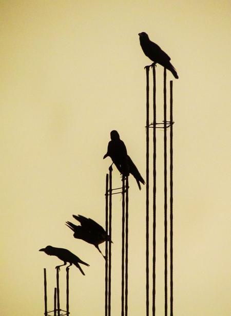 Birds on the Metal