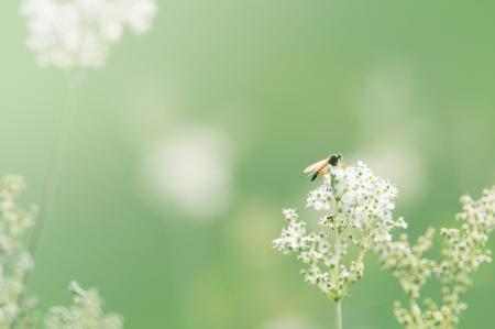 Black and Orange Winged Insect Pearch on Baby's Breath