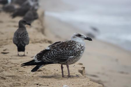 Black and White Bird on Brown Sand