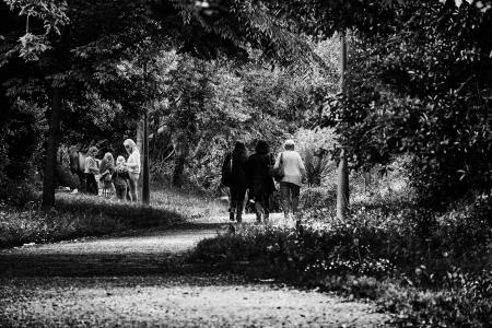 Black and White Photo of 3 Woman Walking in Forest