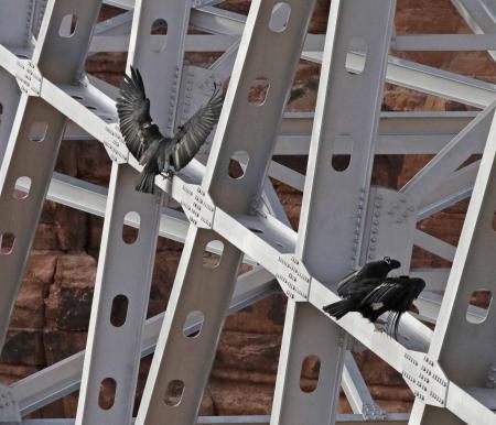 Black Birds on Scaffolding