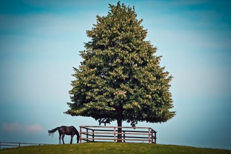 Black Horse Beside Green Leave Tree