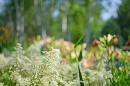 Blurry flower bed