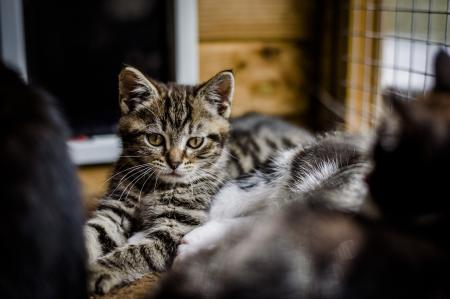 Boy Cat