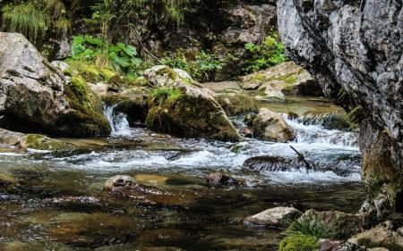 Brook or Stream