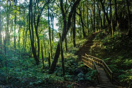 Brown Stair Between Trees