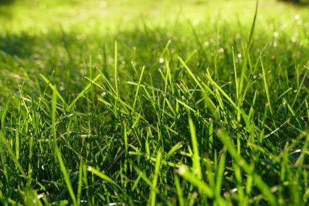 Burned green grass