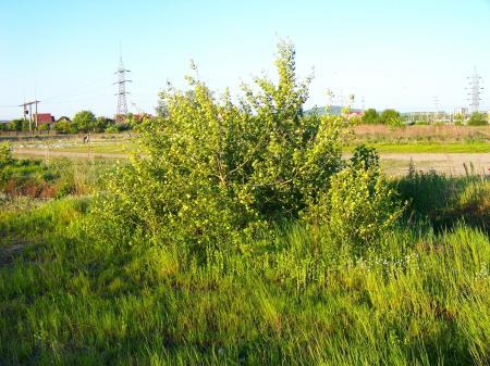 Bush on a field
