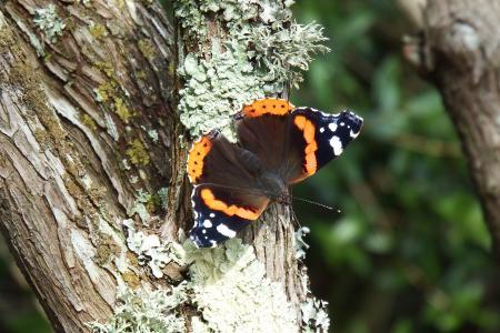 Butterfly in Tree