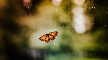 Butterfly on Window