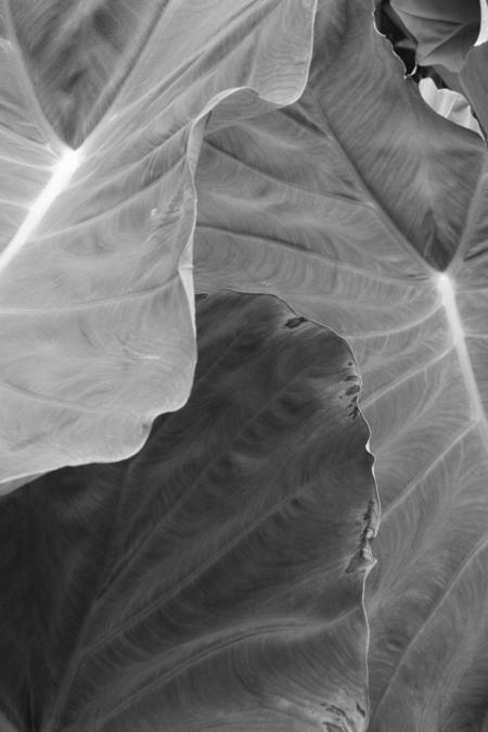 BW Leaves up close