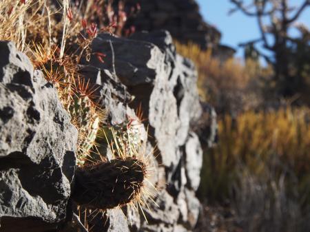 Cactus on rocks