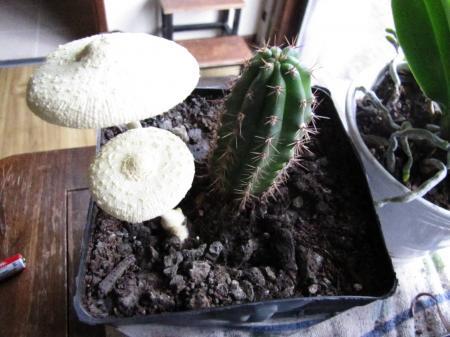 Cactus will hurt