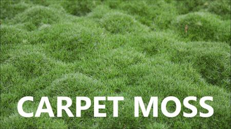 Carpet from moss