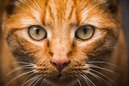 Cat Face Close-up