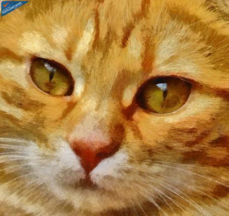 Cat - ID: 16218-130636-4981