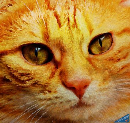 Cat - ID: 16218-130649-5573