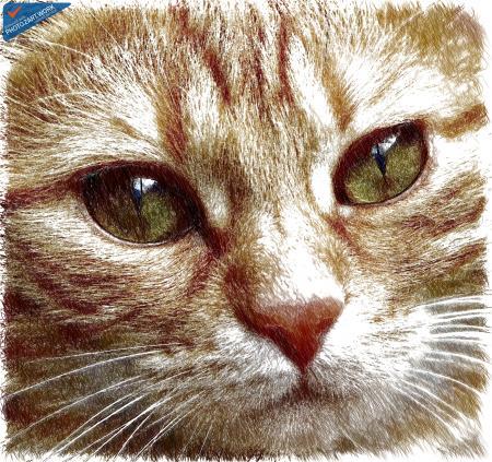 Cat - ID: 16218-130658-6952