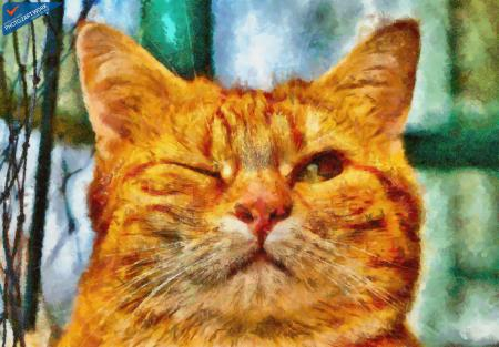 Cat - ID: 16218-130707-1797
