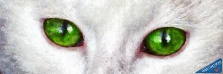 Cat - ID: 16236-105008-8164