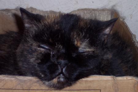 Cat sleeping in a box