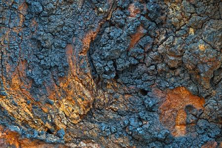 Charred Wood - HDR Texture