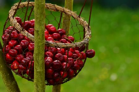 Cherries Basket