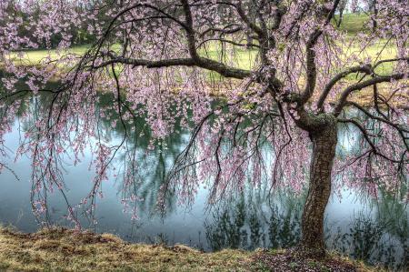Meadowlark Spring Gardens