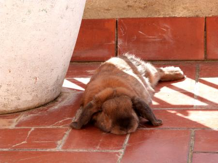 Chewbacca's extreme napping