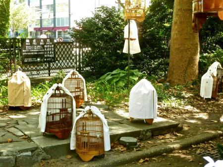 China Bird Walking