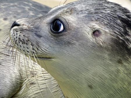 Close-up of Sea Lion at Beach