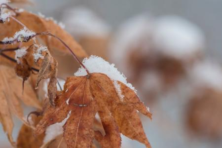 Close Up Photography of a Withered Leaf