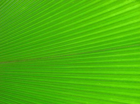 Closeup of a bright green tropical leaf