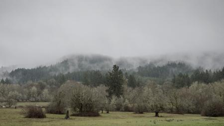 Coastal range in the winter, Oregon
