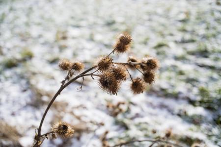 Cold Winter Landscapte Plants Outdoor