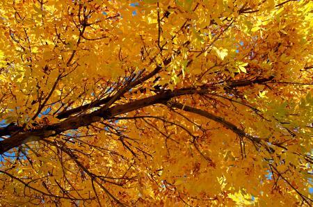 Colorado Golden Autumn II