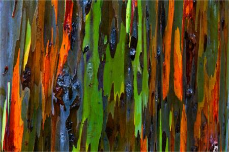 Colorful tree bark