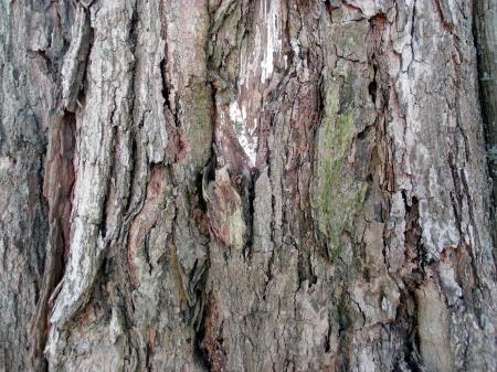 Colorful tree bark