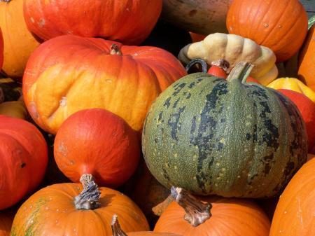 Colorfull pumpkins in fall