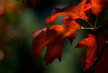 Colours of fall.