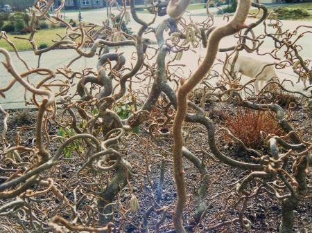 Convoluted Tree Branches