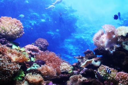 Corals in the blue water