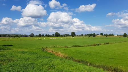 Cows-in-green-field-with-blue-sky-and-white-clouds